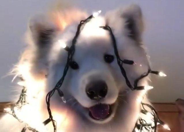 HYB4 Film: Fluffy Christmas