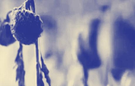 HYB4 Film: Krajina v tísni