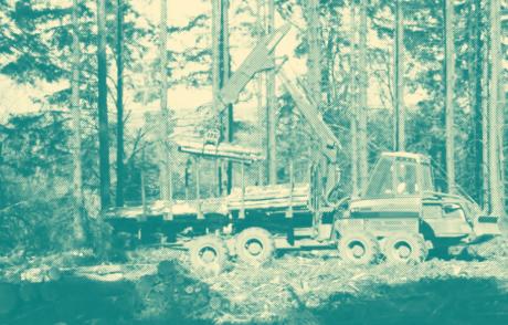 HYB4FILM: Čas lesů