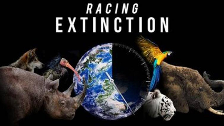 HYB4 Student: Social Screenings: Racing Extinction (2015)